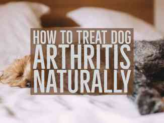 Treating Dog Arthritis Naturally