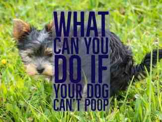 my dog can't poop