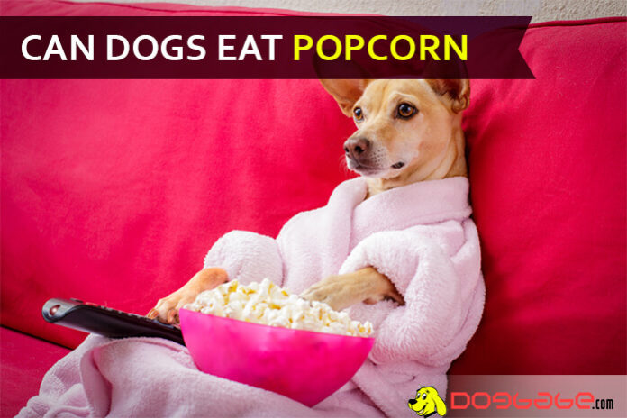 Can I feed Popcorn To My Dog? Is Popcorn Bad For Dogs ...