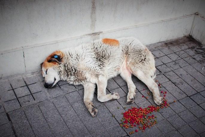 streetdog1