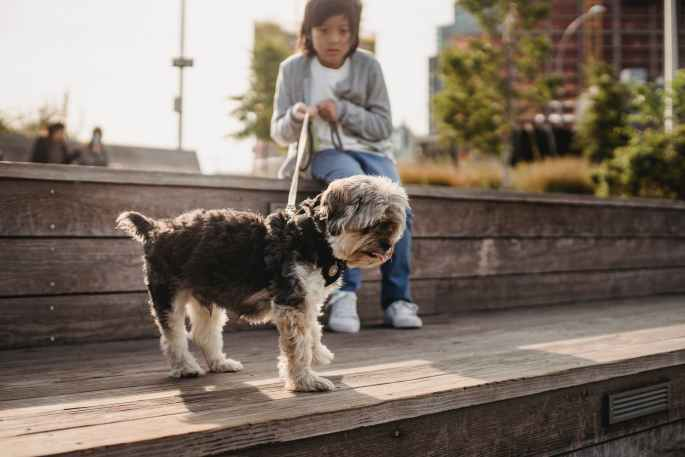 ethnic little boy with dog on leash