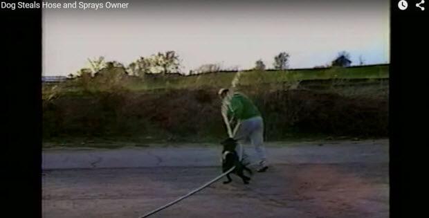 dog sprays owner with hose