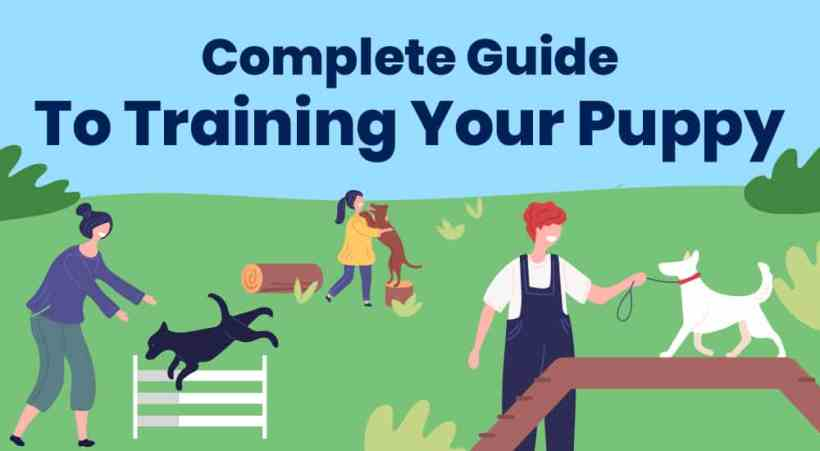 1.Complete Guide To Training Your Puppy