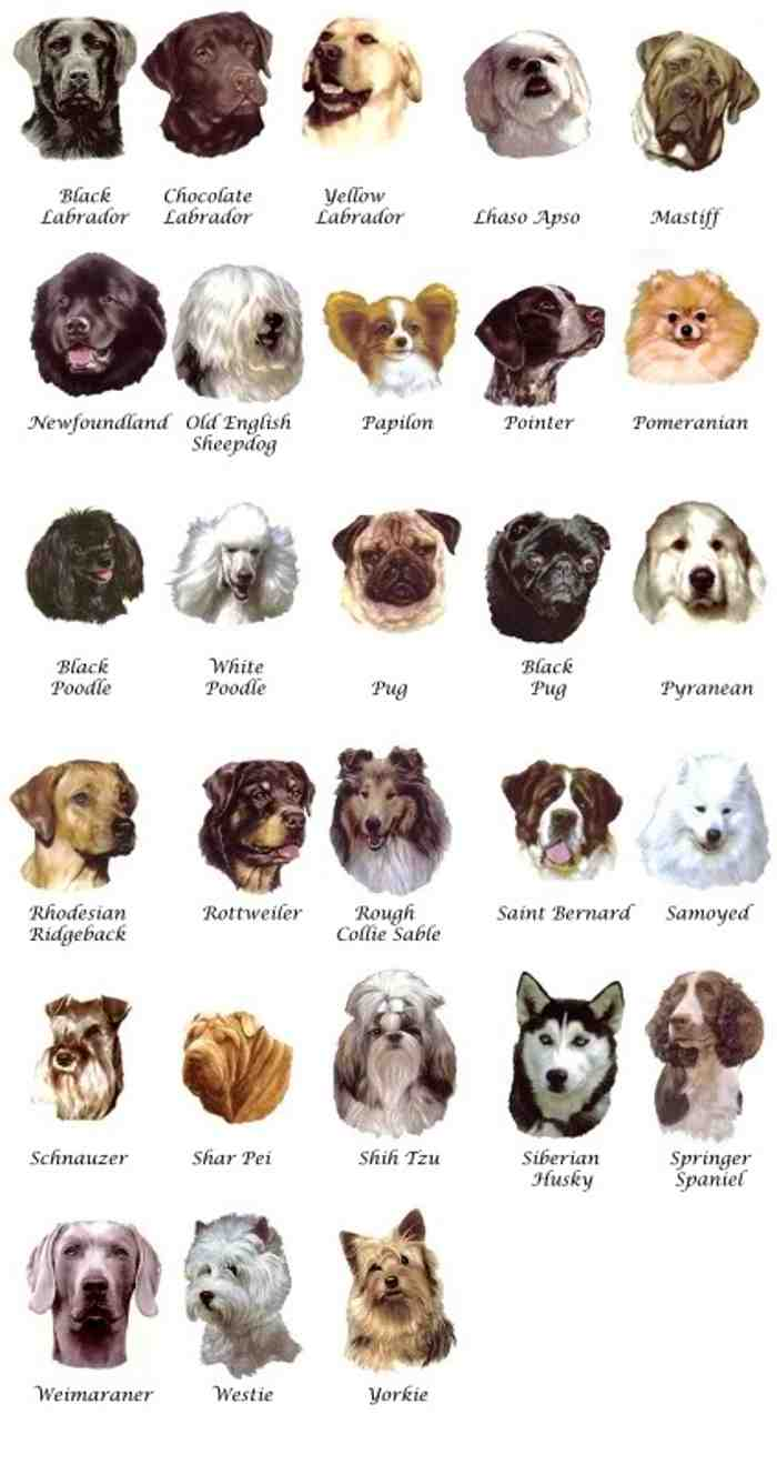 Pictures Of Dog Breeds Dog Breeders Guide