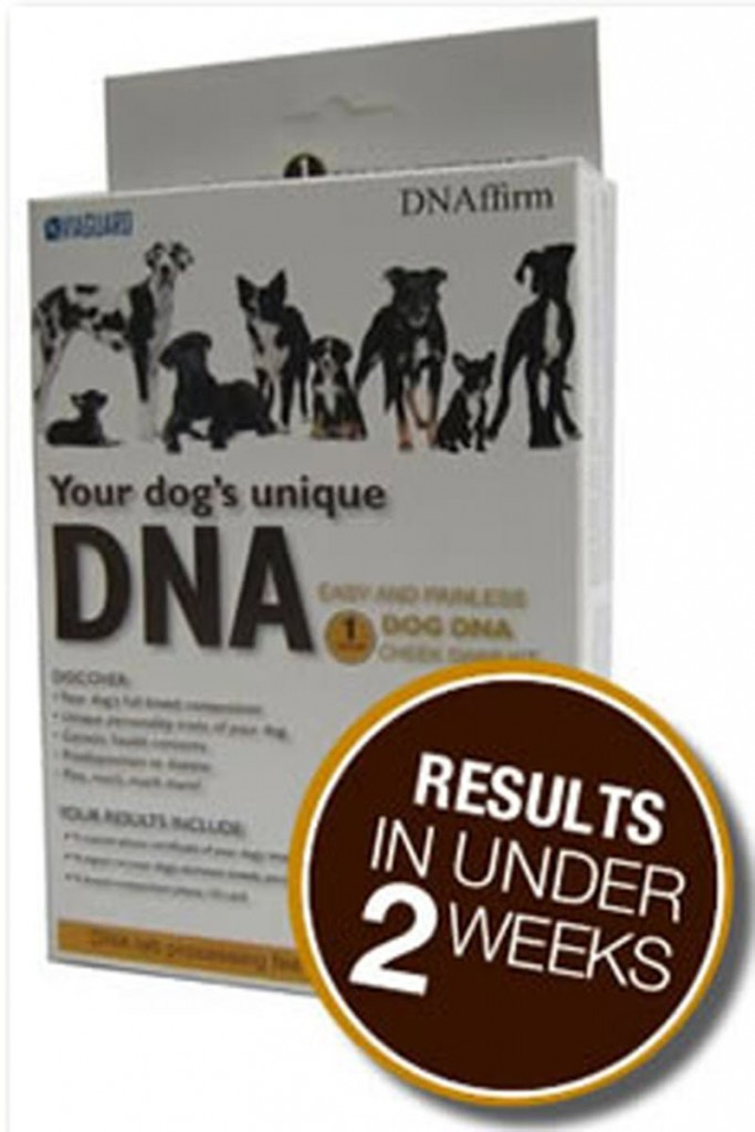 dna my dog reviews