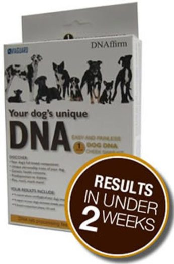 canine dna breed identification test review