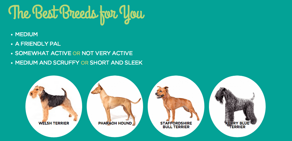 The Perfect Breed