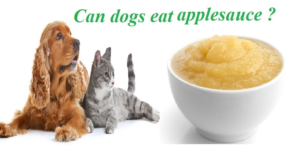 Can Dogs Eat Applesauce Safely Every day? - Dog Carion
