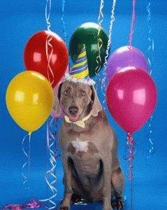 Как определить возраст щенка дворняжки по глазам. Как правильно определить возраст щенка или взрослой собаки