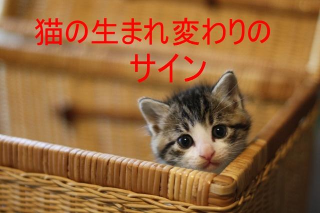 猫の生まれ変わりのサイン