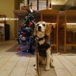 年末は愛犬と楽しむフレンチディナー!