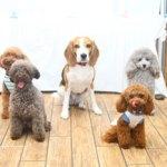 犬の困った行動を飼い主さんがどう思っているか?で変わるもの。