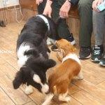 小さい犬、大きい犬、、、どっちも犬。
