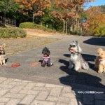 グループトレーニング(一庫公園)