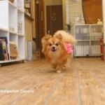 【犬の躾】犬たちと楽しく暮らしていくにはどうすれば良いのか?