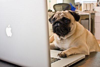 Pug laptop