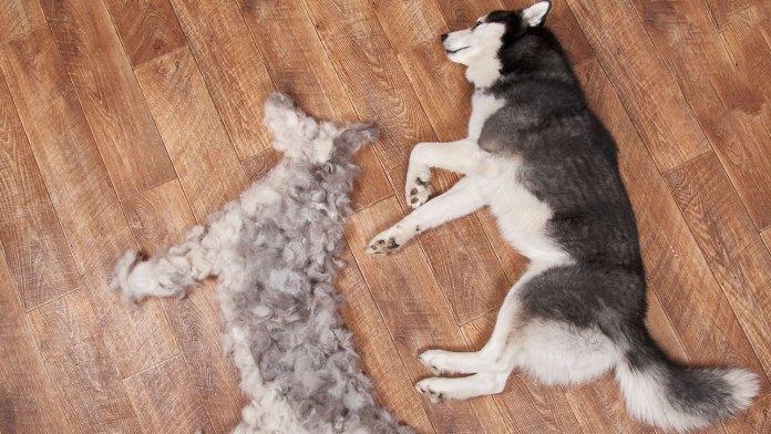 Tips For Reducing dog Shedding