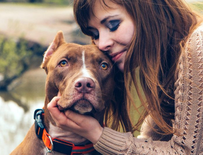 How to find out what dog breed is best for you.