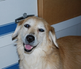 Senior dog with dementia