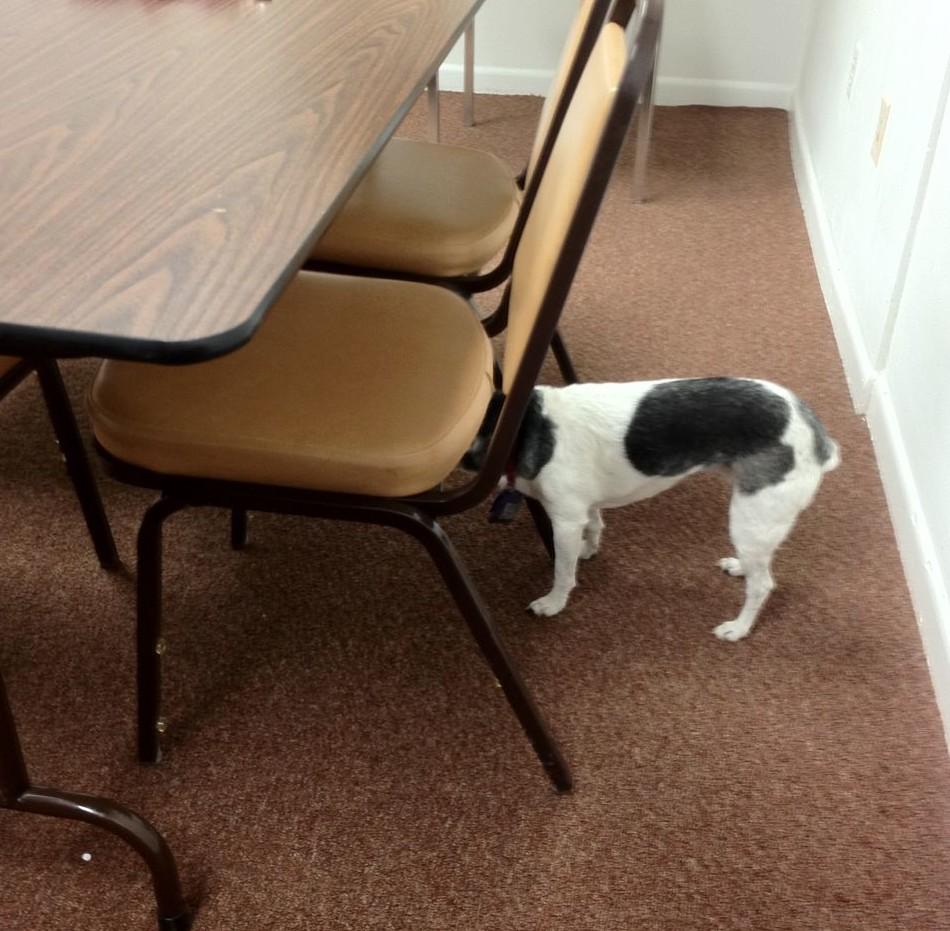 Awesome Dog Dementia Symptoms Creativecarmelina Interior Chair Design Creativecarmelinacom