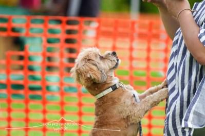DOG FES IWAKI 2017_3247