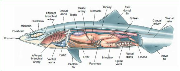 Characteristics  Dogfish Experts 101
