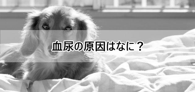 犬の血尿の原因はなに?