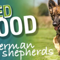 Honest Kitchen Dog Food Reviews Ready Made Island For What Is The Best A German Shepherd?
