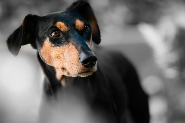 犬用おやつ国産