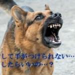 犬が興奮して手がつけられない時の対処法