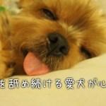 犬がベロベロと肉球を舐め続けるのはアトピー?病気?