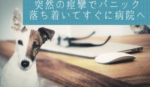 犬の突然の痙攣の対処法!私の体験談