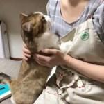 飼い主のお母さんへ甘える猫ちゃんが可愛い動画