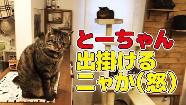 仕事始めの飼い主さんに対して寂しそうな猫ちゃんがとってもかわいい動画