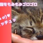 子猫が眠たくて指をチュチュおしゃぶりしてる、癒し動画