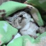 雨のふる夜に突然やってきた猫、子猫ちゃん
