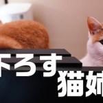 猫さんおはよう〜起きたら姉妹猫ちゃんに見下ろされていた〜