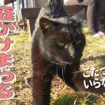 喋る黒猫ちゃんとお庭でまったりお散歩動画