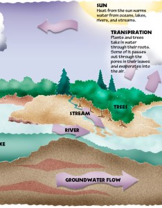 This also the water cycle dogfoose michael kline rh