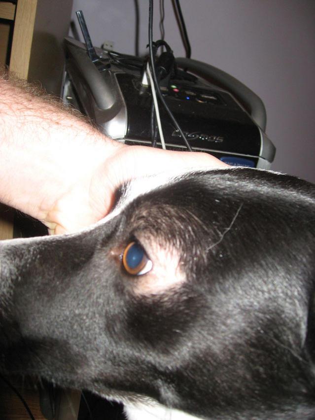 Why Is My Dog Losing Hair Around His Eyes : losing, around, Around, Dog's, Puppy, Forum, Forums