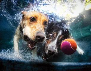 Blog12 Dogs Underwater 04