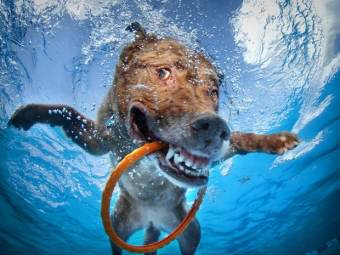Blog12 Dogs Underwater 08
