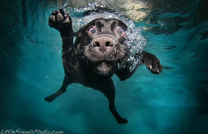 Blog12 Dogs Underwater 09