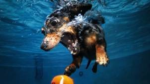 Blog12 Dogs Underwater 11