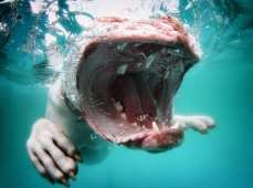 Blog12 Dogs Underwater 12