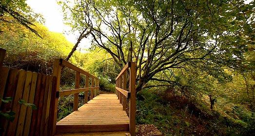 Woodland at Old Lanwarnick