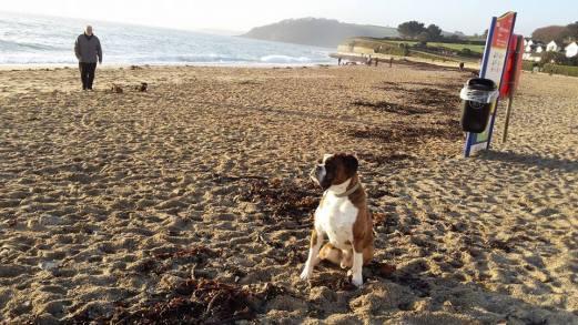 Blog07 Dogs Enjoying the Beach 05
