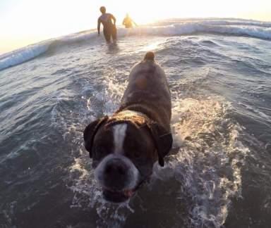 Blog07 Dogs Enjoying the Beach 16