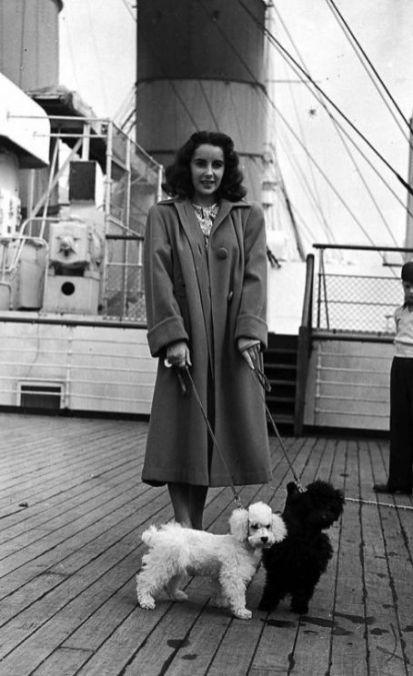 Elizabeth Taylor con sus perros.