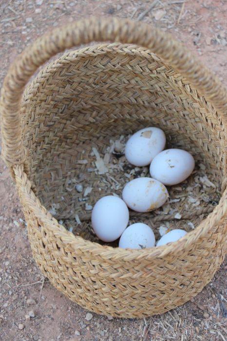 Huevos 0